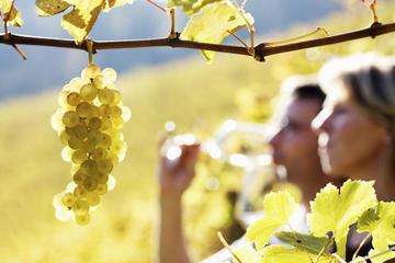 avignon wine tour