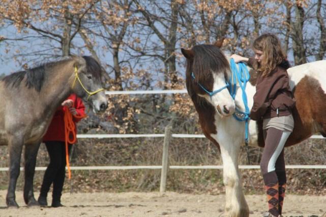 equitation vaucluse