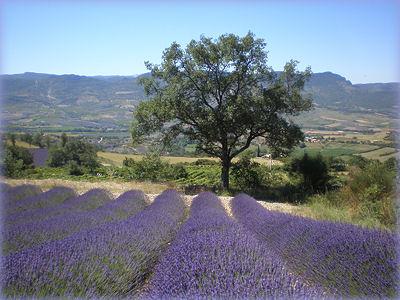 vaucluse paysage