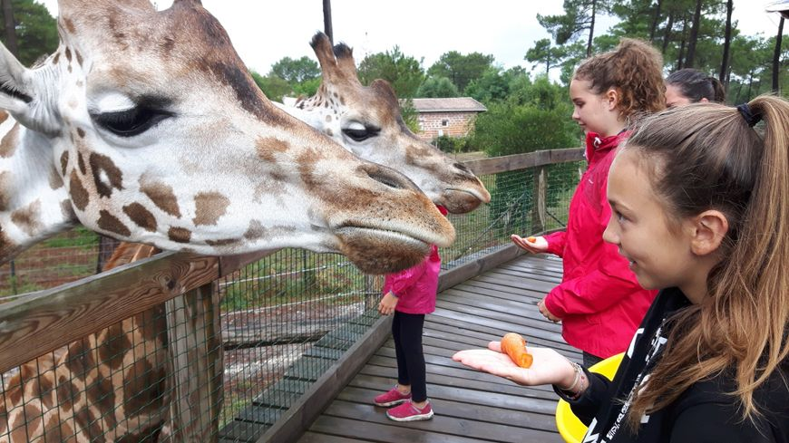 vaucluse zoo